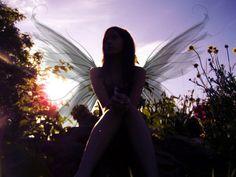 Laurel. Wings by Aprilynne Pike.