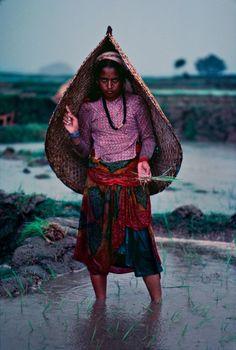 Rice Field Farmer from Pokhara, Nepal.