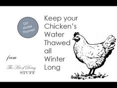 Keep your chickens' water thawed all winter long