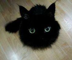 pretty fluffy ball
