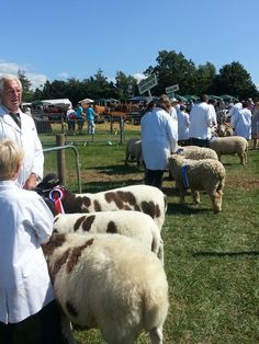 Honiton Show, once a year in August