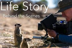 The Making of Life StoryHow did the BBC make the nature documentary 'Life Story'? Watch this to go behind the scenes.Arriving June 20 #refinery29 http://www.refinery29.com/2016/05/111721/netlfix-arrivals-june-2016#slide-66