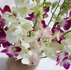 long stem Mixed Orchids