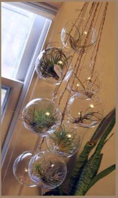 Someday, when I'm an Empty Nester, I am going to have stuff like this in my house. But air plants are surprisingly high maintenance, so it's a no-go right now.