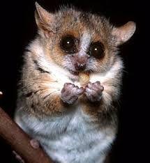 lemurs images - Google Search