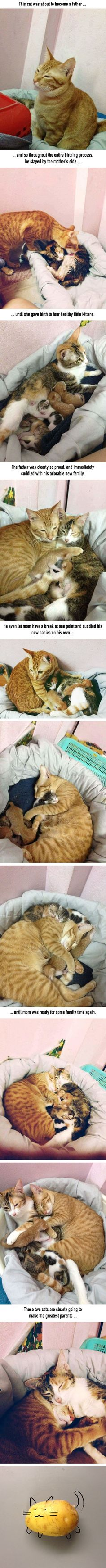 Cat dad won't leave mom's side as their kids are being born