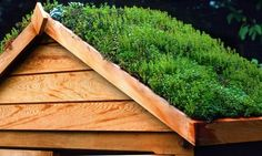 A green roof on a shed