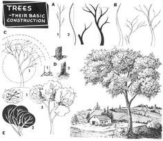 Step 03 trees construction How to Draw Trees, Bark, Twigs, Leaves and Foliage…