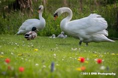 Zwaan fam. by EMR Photography
