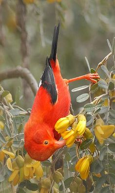 Amazing colors #birds #bird