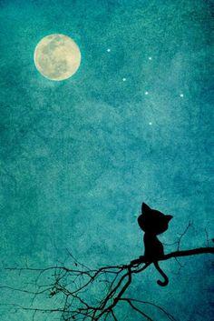 Fondo de pantalla de un gatito mirando a la luz de la Luna