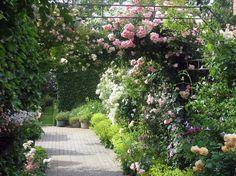Foto uit de tuin van Fernandreniers