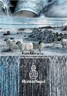 IAN LAWSON - ISLE OF HARRIS These photos are stunning. I love to see the relationship between the colours found in Harris Tweed and the area that it comes from. Harris Tweed Stoff, Harris Tweed Fabric, Tartan Fabric, Tartan Plaid, Isle Of Harris, Jean Délavé, Outer Hebrides, Pendleton Wool, Animal Photography