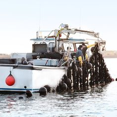 Fresh #PEI #Mussels are farmed from our clean waters 365 days a year. Having no snow or ice now makes things a wee bit easier! #seafood #food #foodie #chefs #farming #boat #princeedwardisland #hungry