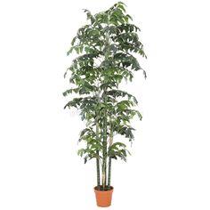 TCB-09 250CM Artificial Fishtail Palm Small Palm Trees, Small Palms, Leaves, Plants, Plant, Planets