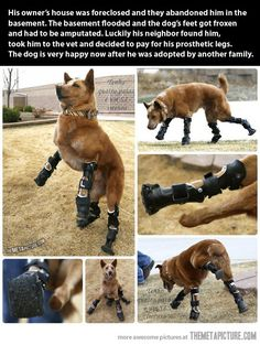 Touching story of the dog getting a new life; but a really amazing story (hardly mentioned) about the neighbor who saved him, paid the bills, got the legs, and got him another home! Wow. Hope. Yeah.