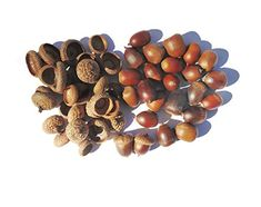 Tin Roof Treasure's Pack of 75 Fresh Natural Acorn Nuts Plus a Pack 85 Matching Caps Acorn Crafts, Pine Cone Crafts, Xmas Crafts To Sell, Interior Bohemio, Fabric Dyeing Techniques, Shibori Fabric, Sewing Crafts, Diy Crafts, How To Fold Towels