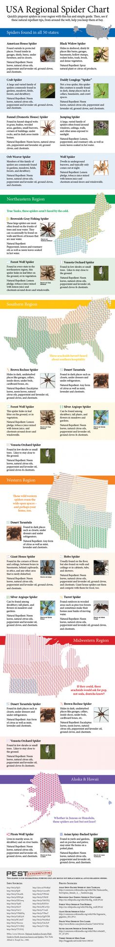 House Spider Identification Chart | USA Spider Identification Chart Infographic