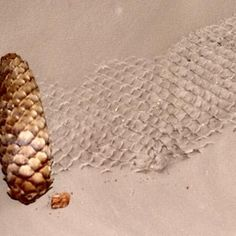 Using pine cone to make impression