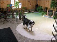 Bed and Breakfast Near Sturbridge MA Restful Paws Pet Friendly Inn Dog Pool Pet Boarding