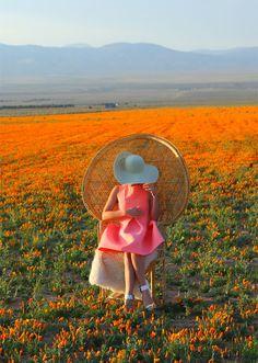 where to see poppy fields california | kelly golightly