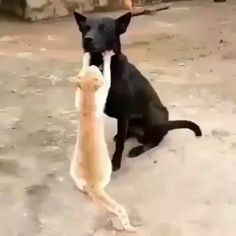 Funny Cats and Kittens Jump Meowing - Cats and Dogs - Funny Animal Videos, Cute Funny Animals, Funny Animal Pictures, Cute Baby Animals, Funny Cute, Funny Dogs, Animals And Pets, Cute Cats, Super Funny