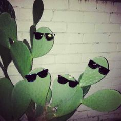 haha, this kind of makes me want a cactus. Photo Wall Collage, Picture Wall, Aesthetic Photo, Aesthetic Pictures, Aesthetic Green, Photocollage, Green Photo, Cursed Images, Mood Pics