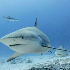 Perfect day for some Bullshark diving 🤘Who is in? Perfect Day, Scuba Diving, Shark, Mexico, Wanderlust, Ocean, Adventure, Photo And Video, Lifestyle