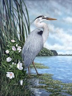 blue heron watercolor painting - Google Search