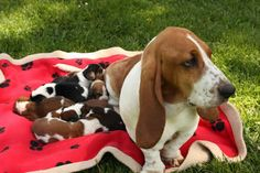 Awww... a good, sweet MaMa and her pups! SO lovely!