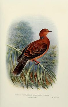 Indian pigeons and doves / - Biodiversity Heritage Library