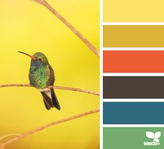 Colour palette - just for some ideas hummingbird hues