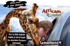 Últimos lugares para Africam Safari este domingo http://www.turismoenveracruz.mx/promociones/
