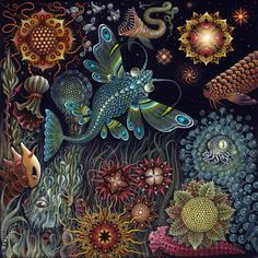 Robert S Connet - StarFish
