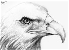 How to Draw a Eagle like an artist | Hand-Drawn Eagle Head by *Yayster on deviantART loved by Art Ed Central