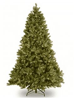Feel Real® branch tip technology gives the Downswept Douglas Fir Christmas Tree from National Tree Company a naturally lush look. Pre-lit with Dual Color® LEDs that transition from white to multicolor with an easy to operate foot pedal switch. Douglas Fir Christmas Tree, Douglas Fir Tree, Pre Lit Christmas Tree, Beautiful Christmas Trees, Christmas Store, Christmas Central, Christmas Gifts, Christmas Ideas, Christmas Decorations