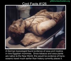Cool facts #126  http://en.wikipedia.org/wiki/Pre-Columbian_trans-oceanic_contact