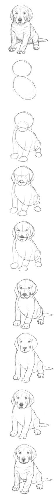 how to draw a puppy…
