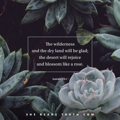 """Just as God proved Himself faithful to rescue and restore our ancestors...so will He always prove Himself faithful to us. He will bring us to our forever home."" @lisadharper @shereadstruth #shereadstruth #lent #holyhustle"