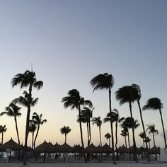 I  Watching sunsets  #nofilter #world #beautiful #sunset #ogh #palm #sea #summer #aruba #america #myphoto #photos #happy #night #sun  by cormelaa