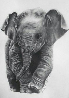 "Baby Elephant Sketch.  ""Cute Art Images"""