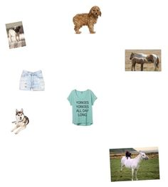 """Horses,goats,dogs in love"" by desisu on Polyvore"