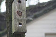 Eekhoorntje nestelt in de tuin van Joyce