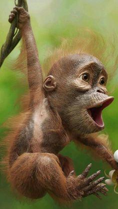 Funny Animal Videos, Cute Funny Animals, Cute Baby Animals, Animals And Pets, Baby Wild Animals, Cute Baby Monkey, Big Animals, Animals Images, Animal Pictures