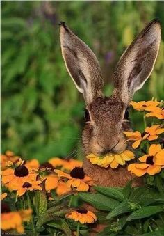 bunny rabbit munching on some flowers by Tobi K~~ Animals And Pets, Baby Animals, Cute Animals, Beautiful Creatures, Animals Beautiful, Animal Pictures, Cute Pictures, Tier Fotos, Cute Bunny