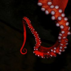 colourful tentacle