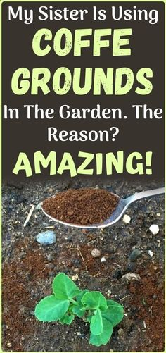 Outdoor Flowers, Outdoor Plants, Outdoor Gardens, Potted Plants, Organic Compost, Organic Gardening, Urban Gardening, Garden Yard Ideas, Easy Garden