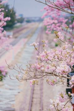 Frühling Wallpaper, Flower Wallpaper, Wallpaper Backgrounds, Nature Pictures, Beautiful Pictures, Le Jolie, Jolie Photo, Pretty Wallpapers, Flower Backgrounds