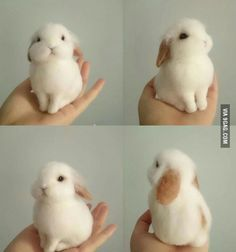 Adorable & photogenic bunny.