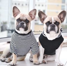Dimi & Calvin in #Pipolli striped tee and hoodie